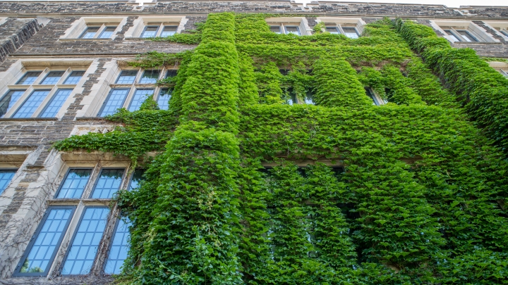 campus building with moss on it